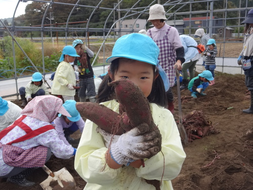ゆり組さん さつま芋掘りに行ってきました!_d0166047_11393964.jpg