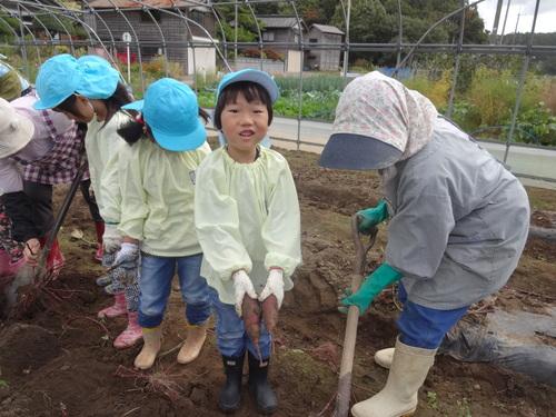 ゆり組さん さつま芋掘りに行ってきました!_d0166047_1140825.jpg