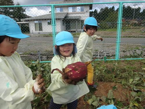ゆり組さん 保育園のさつま芋掘りもやりました!_d0166047_15545145.jpg
