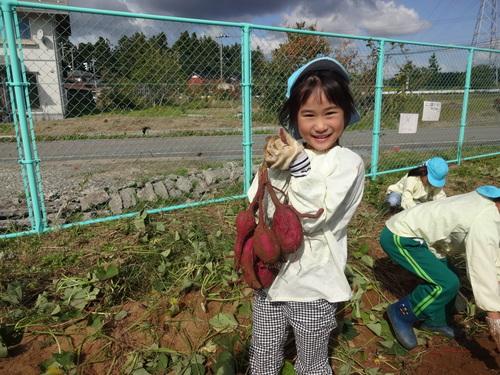 ゆり組さん 保育園のさつま芋掘りもやりました!_d0166047_1555186.jpg