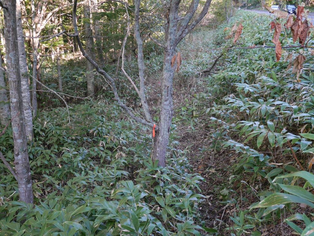恵庭岳、10月7日-初めての登山ルートで-_f0138096_11541135.jpg