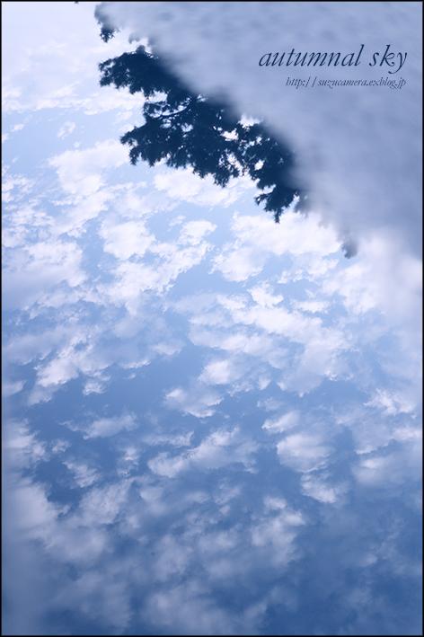 秋の空_f0100215_21202792.jpg