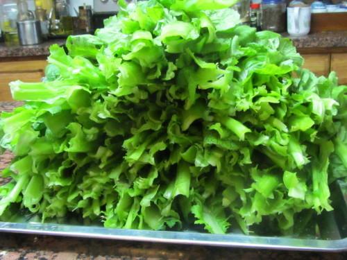 高菜の収穫_a0173527_05140664.jpg
