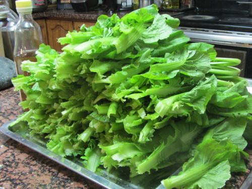 高菜の収穫_a0173527_05153798.jpg