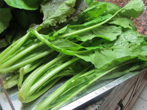 高菜の収穫_a0173527_05163696.jpg