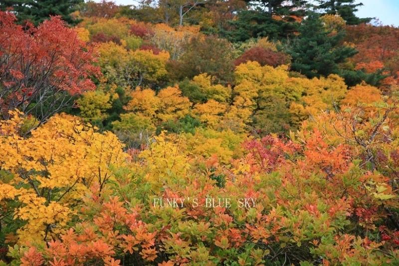 10月中旬~は紅葉シーズン!「紅葉狩り」はなぜ「狩り」というの?