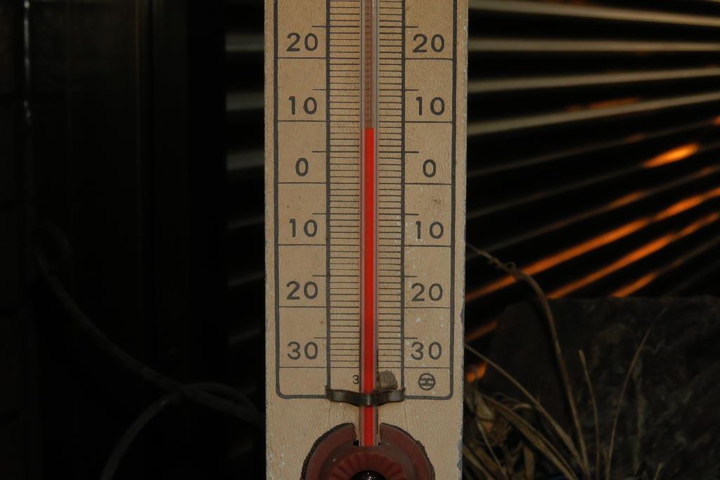 ギンモクセイ/10度Cを割った/アリスイ/ハスカワ/月火水木金_b0024798_10432752.jpg