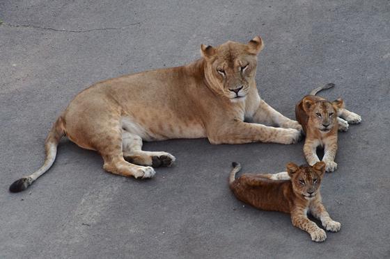 多摩動物公園撮影会_b0016600_1063157.jpg