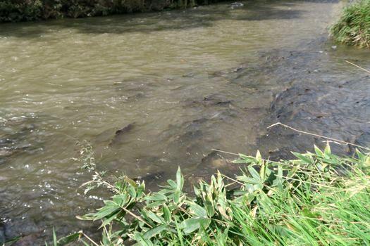 鮭の川へ_c0134734_22252869.jpg