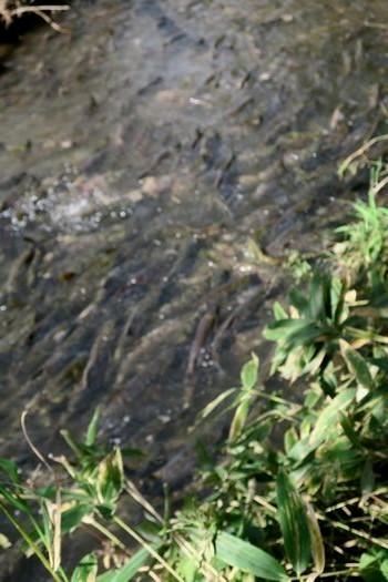 鮭の川へ_c0134734_22253980.jpg
