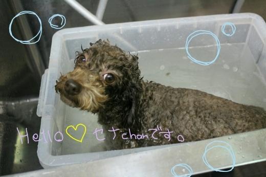 お風呂。_b0130018_01524827.jpg