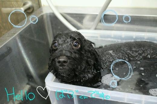お風呂。_b0130018_02025062.jpg