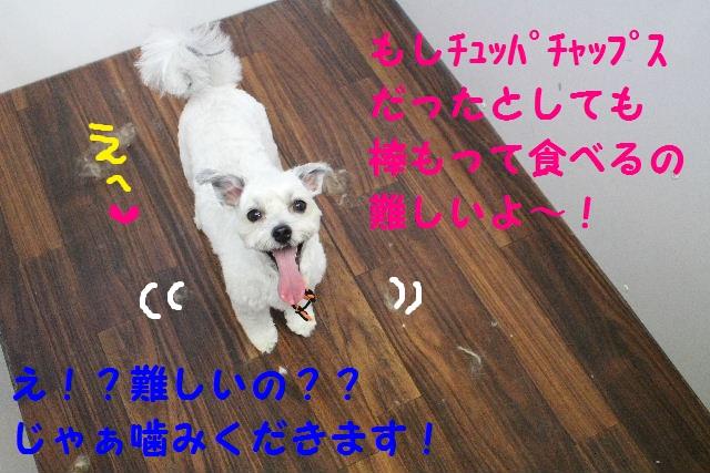b0130018_631822.jpg