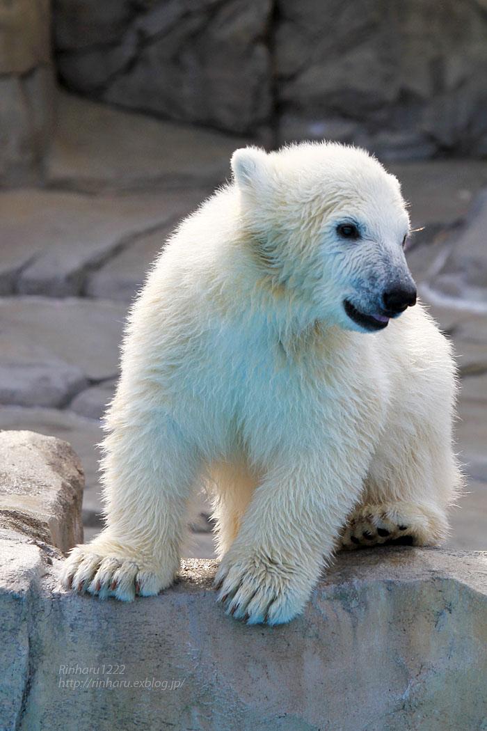 2015.4.30 円山動物園☆ホッキョクグマのララとリラ<その4>【Polar bear】_f0250322_2061038.jpg