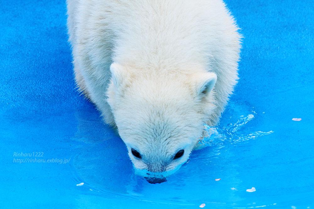 2015.4.30 円山動物園☆ホッキョクグマのララとリラ<その4>【Polar bear】_f0250322_2061789.jpg