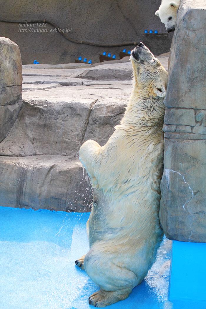 2015.4.30 円山動物園☆ホッキョクグマのララとリラ<その4>【Polar bear】_f0250322_206241.jpg