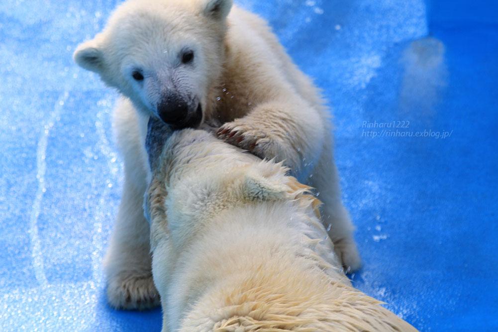 2015.4.30 円山動物園☆ホッキョクグマのララとリラ<その4>【Polar bear】_f0250322_2063782.jpg