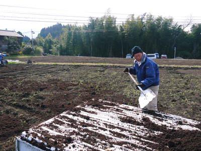 完全無農薬・無化学肥料 菊池水源里山ニンジン!11月下旬より出荷いたします!_a0254656_15475714.jpg