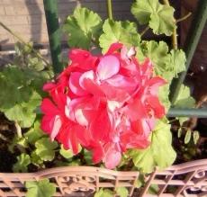 目の前の花にも、目の前の私にも目を向けて下さい!!_b0255217_17344691.jpg