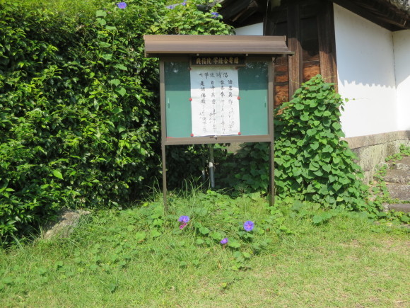 興福院門前の洋花_c0001670_14574343.jpg