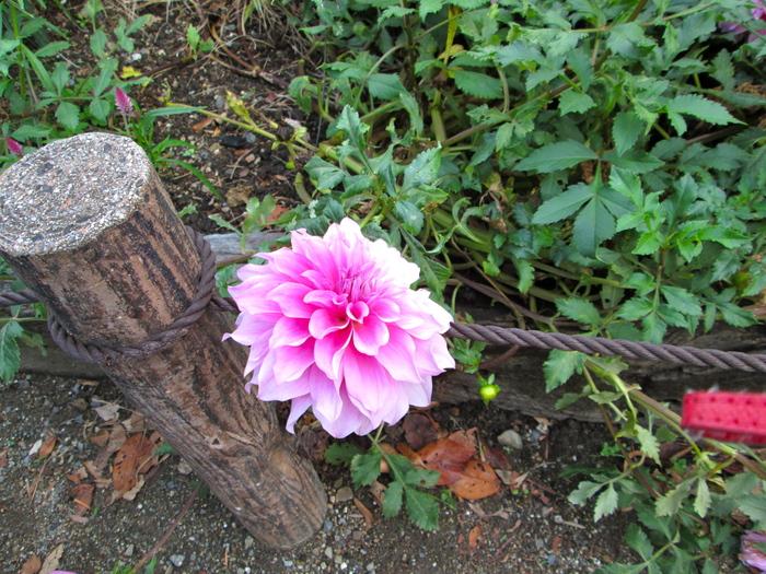 植物園 ケイトさんたちと〜_c0100195_717291.jpg