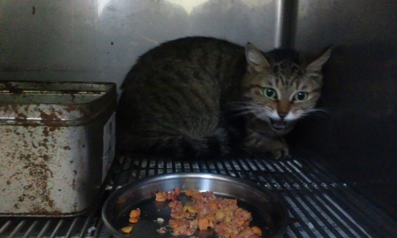 【移動先募集】センター(支所)収容の猫たち(10/2訪問)_f0242002_234753.jpg