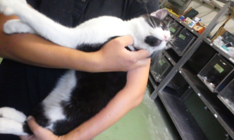 【移動先募集】センター(支所)収容の猫たち(10/2訪問)_f0242002_2382477.jpg