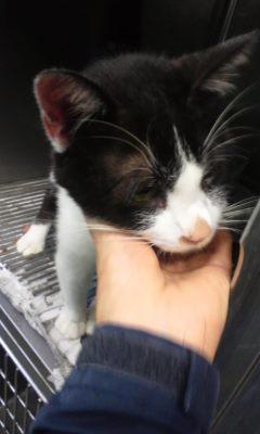 【移動先募集】センター(支所)収容の猫たち(10/2訪問)_f0242002_2383955.jpg