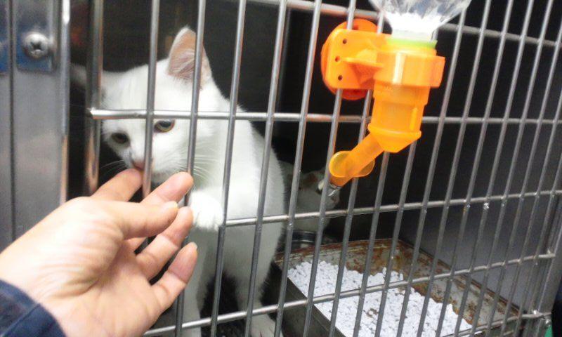 【移動先募集】センター(支所)収容の猫たち(10/2訪問)_f0242002_2421738.jpg