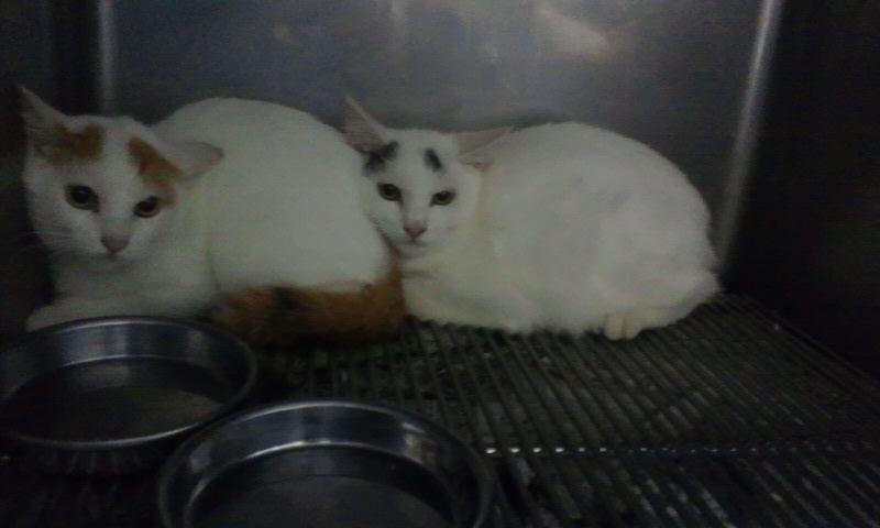 【移動先募集】センター(支所)収容の猫たち(10/2訪問)_f0242002_2422740.jpg