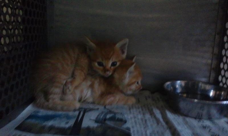 【移動先募集】センター(支所)収容の猫たち(10/2訪問)_f0242002_25107.jpg