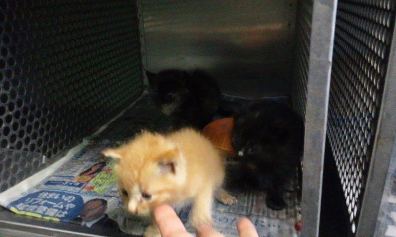 【移動先募集】センター(支所)収容の猫たち(10/2訪問)_f0242002_2535267.jpg