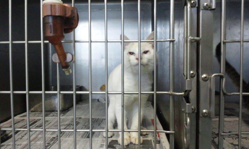 【移動先募集】センター(支所)収容の猫たち(10/2訪問)_f0242002_2593530.jpg