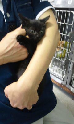 【移動先募集】センター(支所)収容の猫たち(10/2訪問)_f0242002_311970.jpg