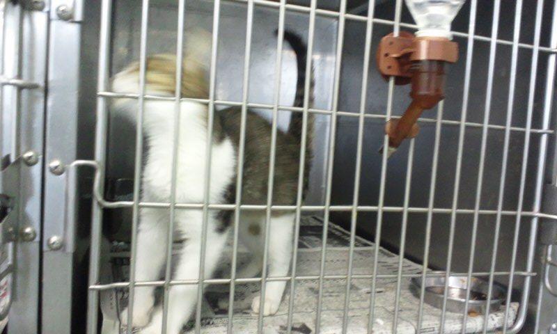 【移動先募集】センター(支所)収容の猫たち(10/2訪問)_f0242002_31301.jpg