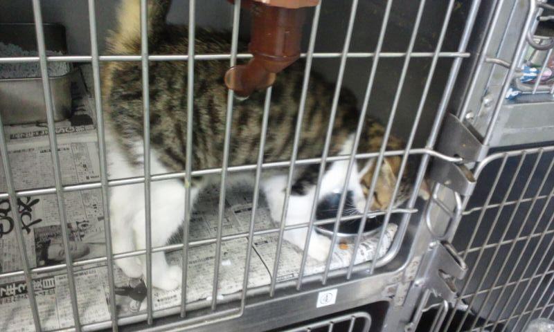 【移動先募集】センター(支所)収容の猫たち(10/2訪問)_f0242002_313918.jpg