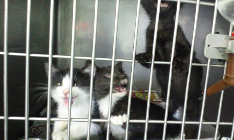 【移動先募集】センター(支所)収容の猫たち(10/2訪問)_f0242002_322666.jpg