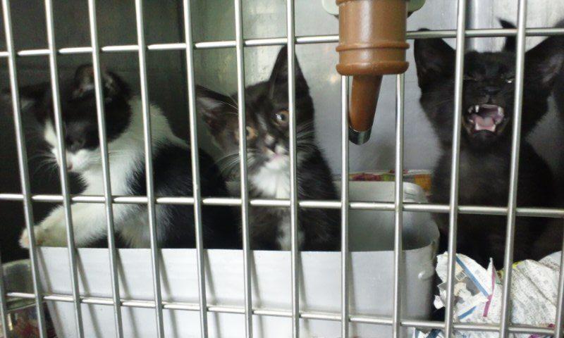 【移動先募集】センター(支所)収容の猫たち(10/2訪問)_f0242002_32353.jpg