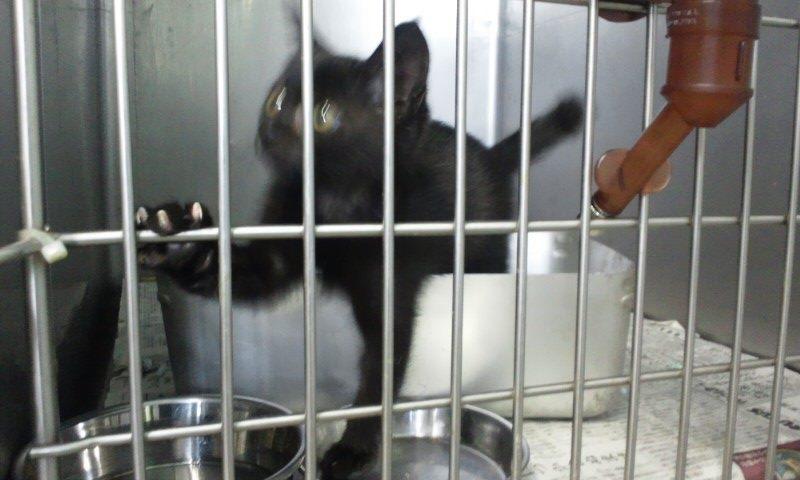 【移動先募集】センター(支所)収容の猫たち(10/2訪問)_f0242002_3243064.jpg