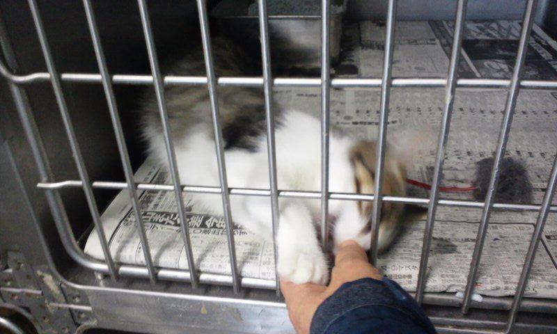 【移動先募集】センター(支所)収容の猫たち(10/2訪問)_f0242002_3244992.jpg
