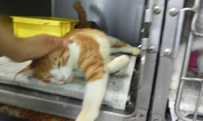 【移動先募集】センター(支所)収容の猫たち(10/2訪問)_f0242002_384653.jpg