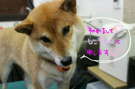 kiri♡_b0130018_01134423.jpg
