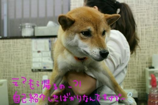 kiri♡_b0130018_01134738.jpg