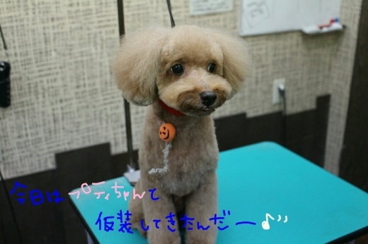 kiri♡_b0130018_01135954.jpg