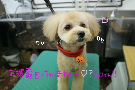 kiri♡_b0130018_01140552.jpg