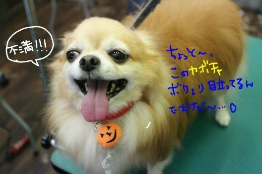 kiri♡_b0130018_13412571.jpg