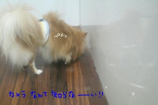 kiri♡_b0130018_13413276.jpg