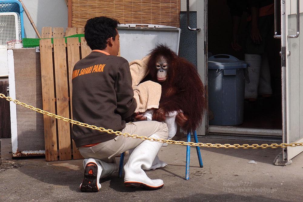 2015.10.10 群馬サファリパーク☆オランウータンのリビアちゃん【Orangutan】_f0250322_22254755.jpg