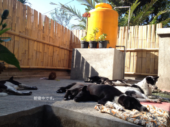 犬さんたちは朝寝中_a0120328_17393036.jpg