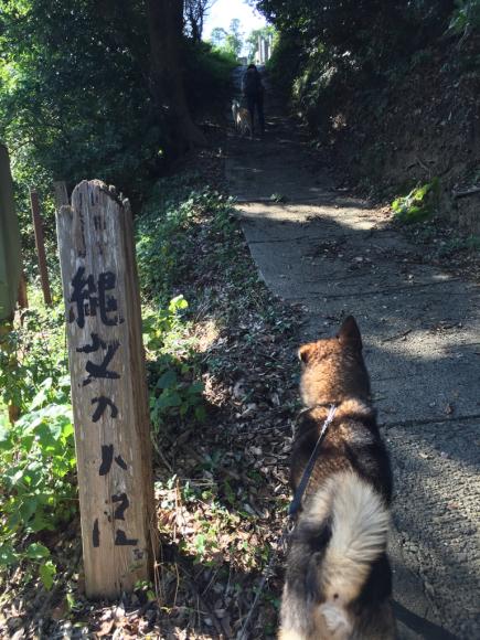 香取市でハイキング_a0126743_01353269.jpg